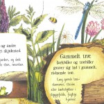 Det kribler og krabler – tag ungerne med ud i det fri