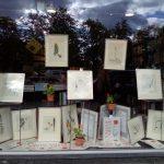 Sjældne Flora Danica illustrationer til salg