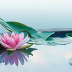 Få større overskud med mindfulness