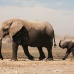 Vild med dyr? 12 gode dyrebøger til børn i alle aldre
