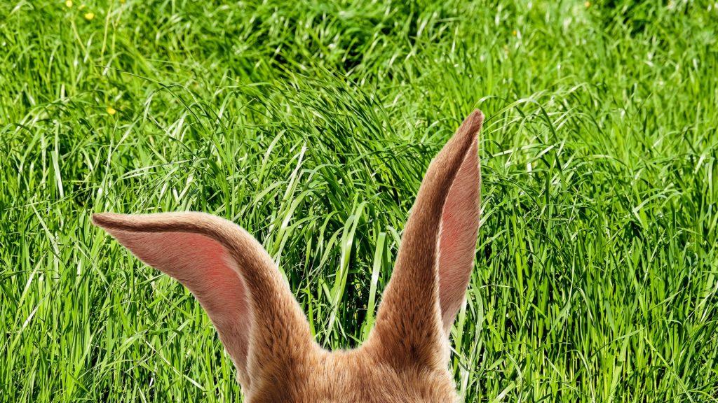Beatrix Potter, familiefilm, Beatrix Potter, De samlede eventyr om peter kanin