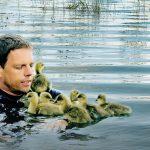Hvordan syv gæslinger ændrede en forskers liv