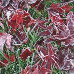 Helle Troelsen: Det er havesæson hele året – også når kulden indfinder sig
