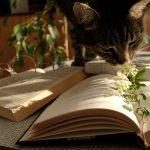 10 bøger med et dyr i titlen eller på forsiden #LRlæser2019