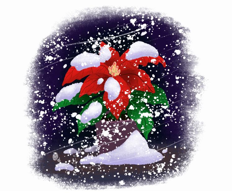 julestjerne af wikke & rasmussen, thorbjørn christoffersen