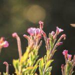 Gå på opdagelse i det grønne! 10 inspirerende bøger om naturen