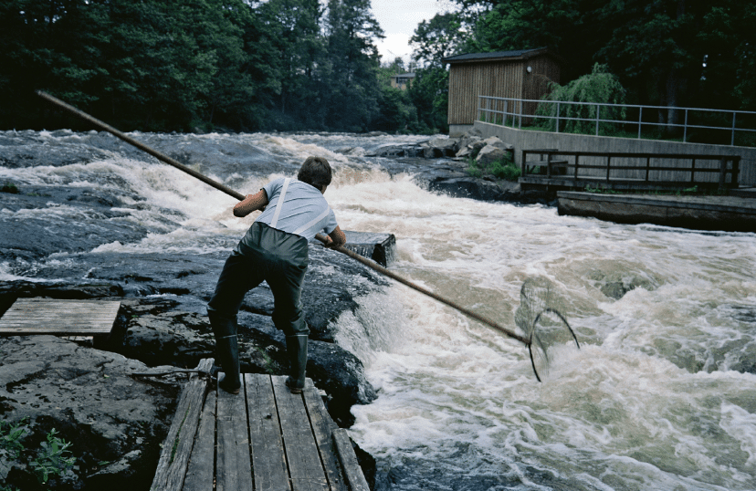 Jan Grünwald, laks, laksefiskeri
