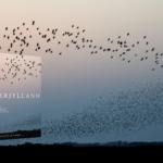 Sønderjylland: Giv et smukt stykke af Danmark i gave