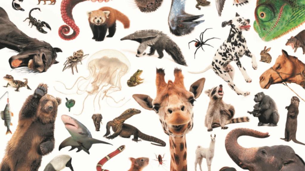 Sebastians store quiz om dyr 2, Sebastian Klein, Dyrebøger, Bøger om dyr