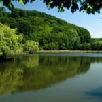 Skal du ud i naturen? Her er 7 bøger, der kan inspirere dig inden din næste friluftsoplevelse