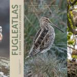 Efter et årtis arbejde: Dansk Ornitologisk Forening udgiver det tredje store Fugleatlas
